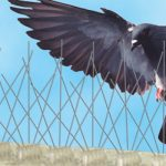 Are Birds Becoming A Greater Problem?